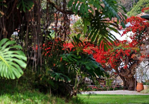 22 Our Madeira Loja Da Lenha Gardens