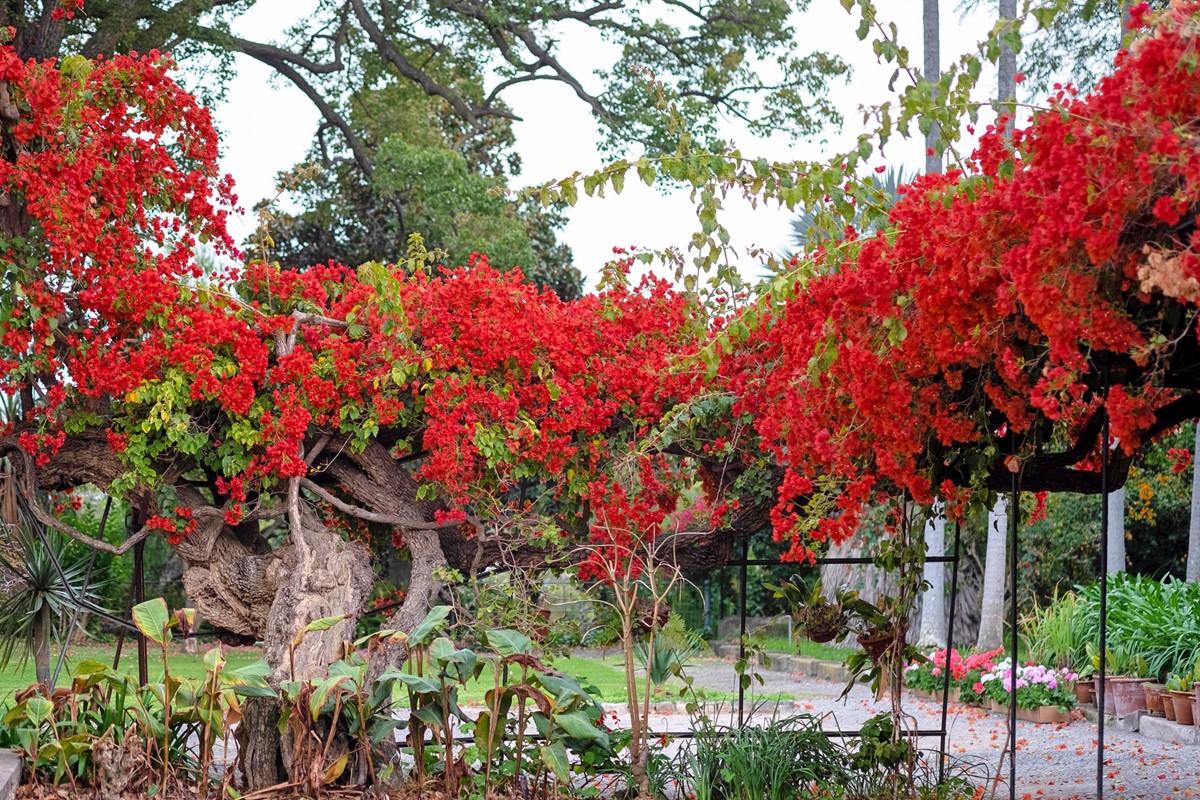 23 Our Madeira Loja Da Lenha Gardens