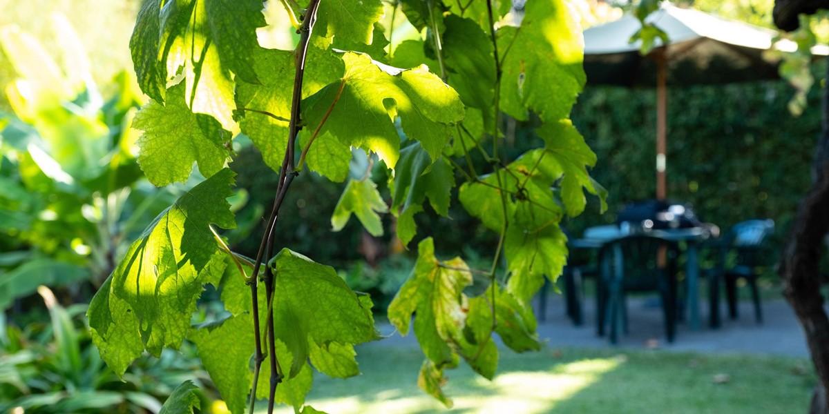 23 Our Madeira Casa Do Feitor Gardens
