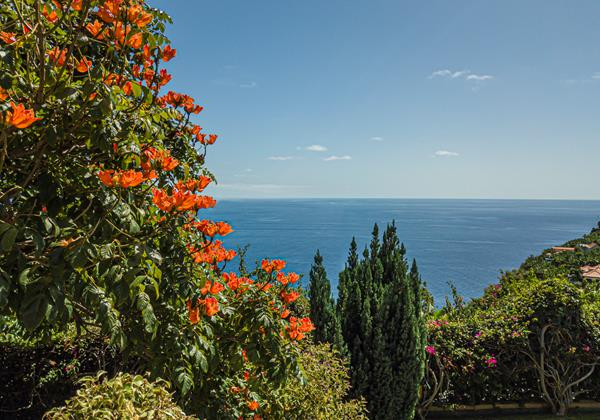 Our Madeira Villas In Madeira With Garden Quinta Girassol Plants