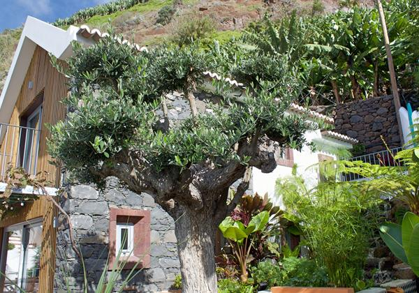 Ourmasdeira Villa Do Mar IV Olive Tree