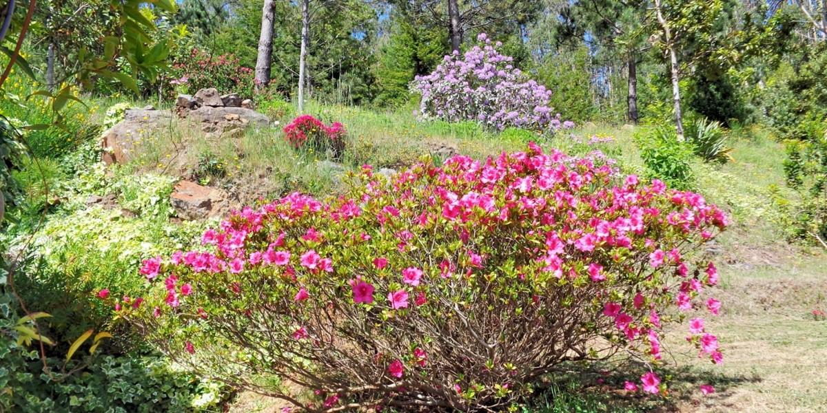 20 MHRD Escapada Dos Cavaleiros Flowers
