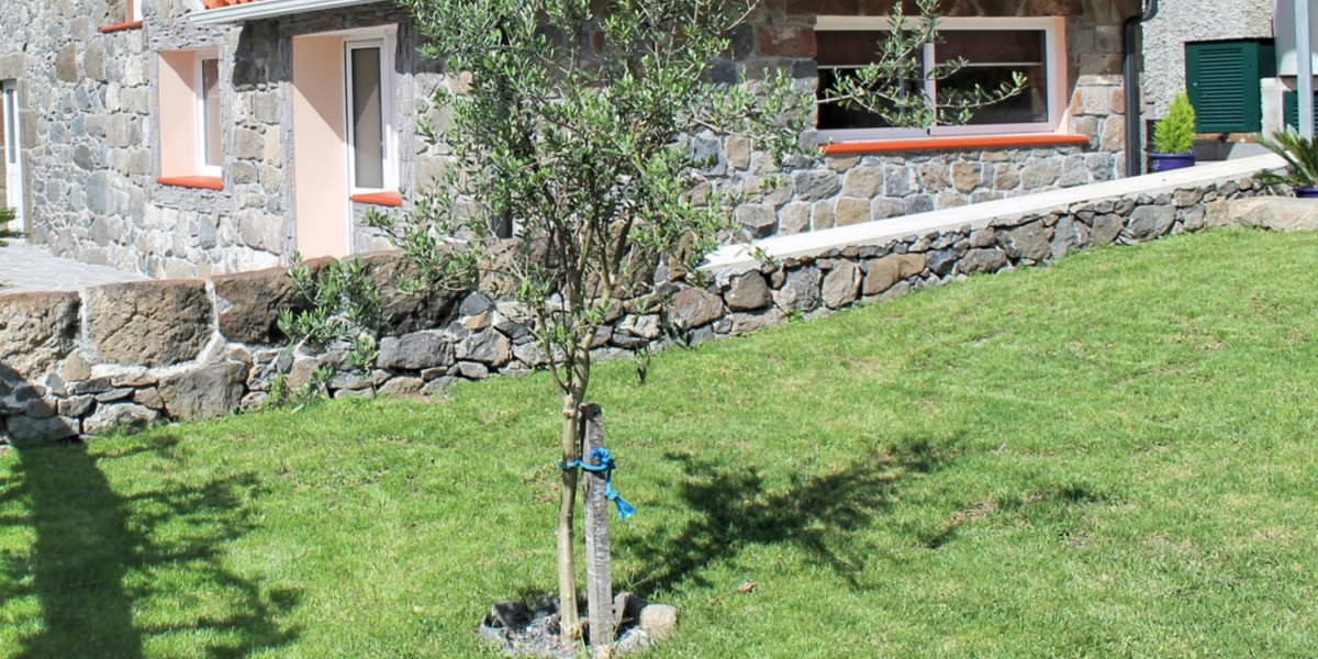 19 MHRD Dinis Country Cottage Lawn And Olive Tree