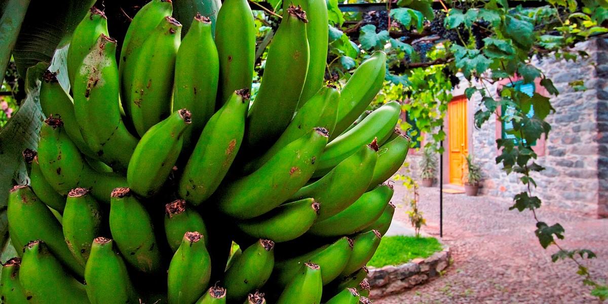 23 Our Madeira Casa Das Vinhas Bananas