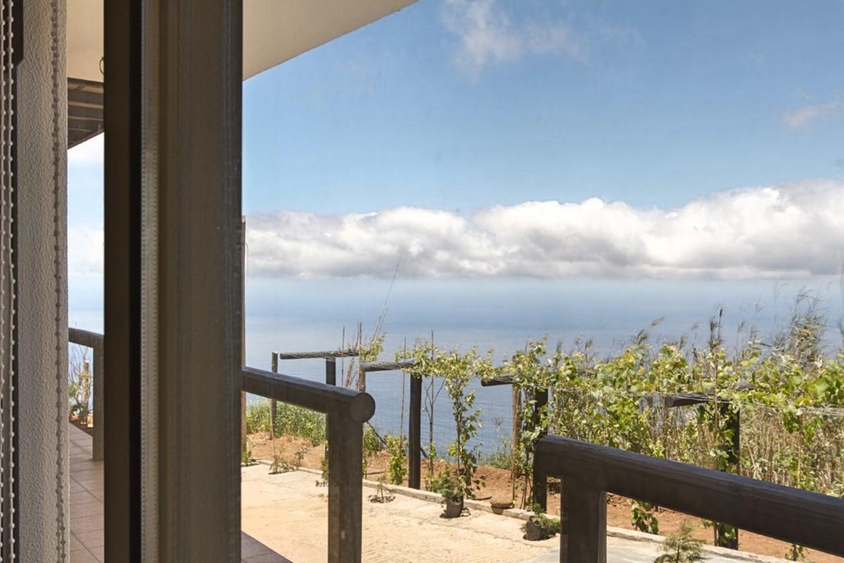 13 Our Madeira Vines